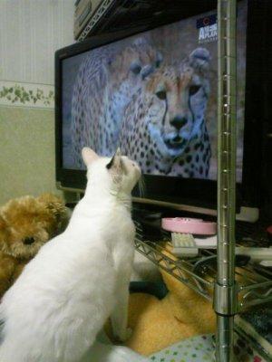 おプッチさん テレビ好き