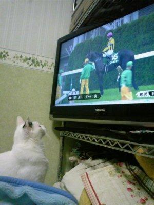 テレビ好き おプッチさん 競馬