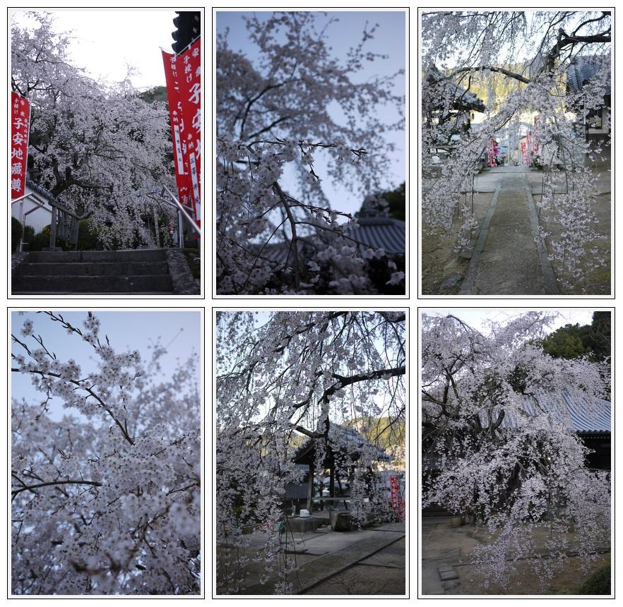 2013年3月30日 山中渓地福寺