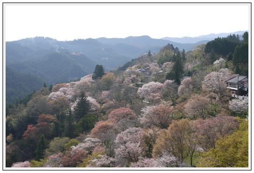 2013年4月9日 宇陀周辺の桜ツーリング(1)