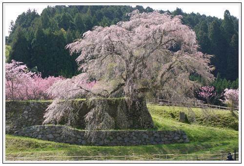 2013年4月9日 宇陀周辺の桜ツーリング(3)