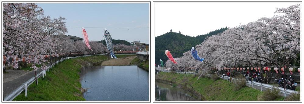 2013年4月9日 宇陀周辺の桜ツーリング(6)