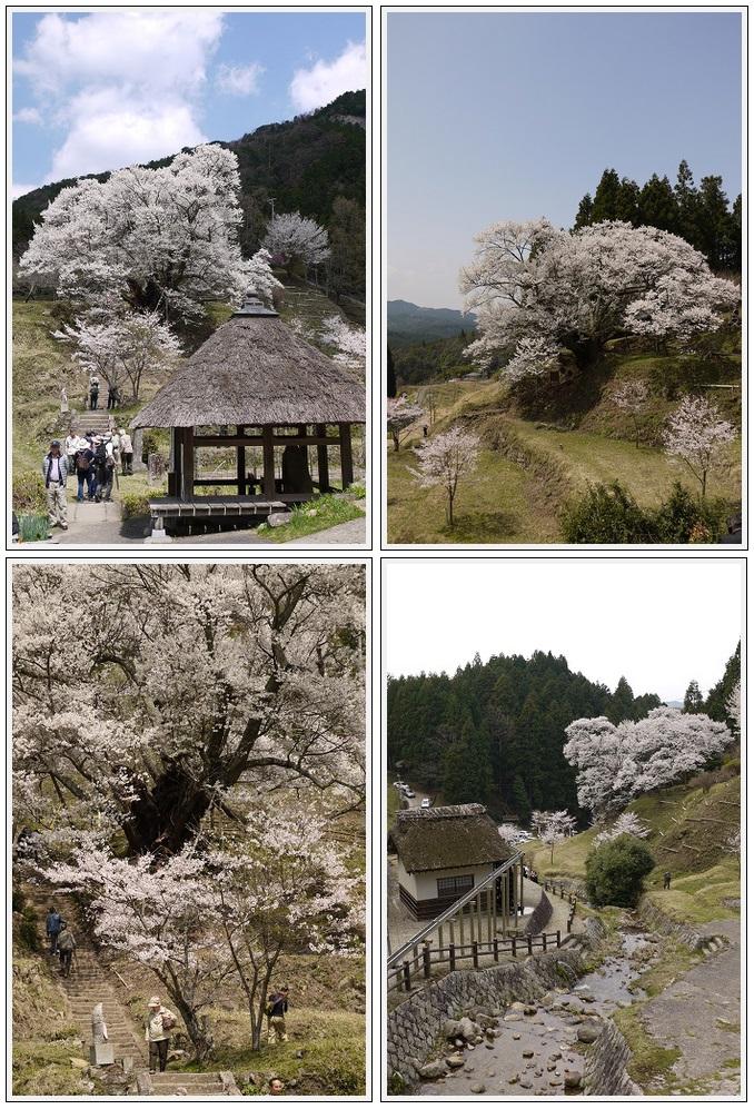2013年4月9日 宇陀周辺の桜ツーリング(7)