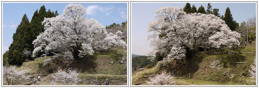 2013年4月9日 宇陀周辺の桜ツーリング(9)