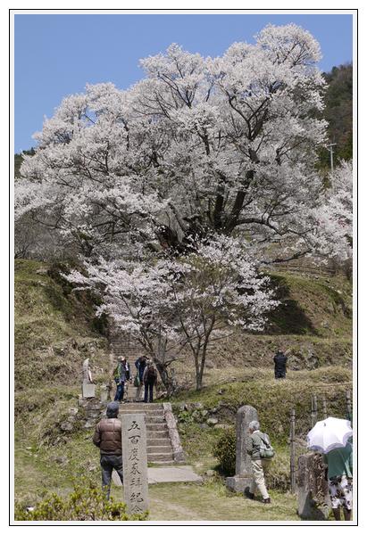 2013年4月9日 宇陀周辺の桜ツーリング (8)