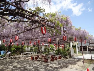 徳王神社の藤1