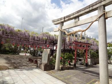 徳王神社の藤2