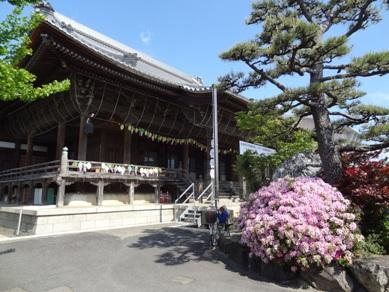 竹鼻別院の藤3