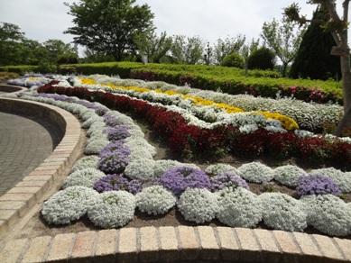 旭公園の花壇3