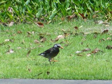 元浜公園にいた鳥