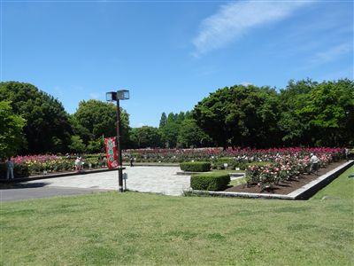 庄内緑地公園バラ園1