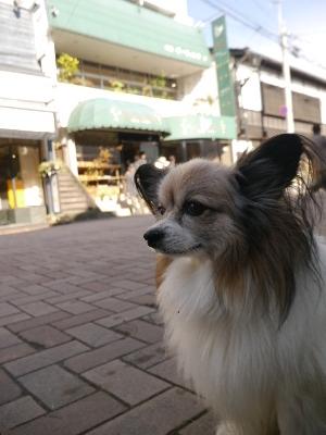 軽井沢晩秋9