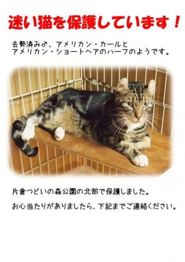 東京都八王子市片倉町 迷い猫