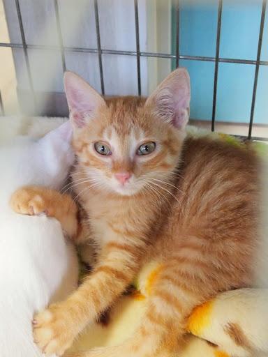 八王子市にて里親募集中の猫写真