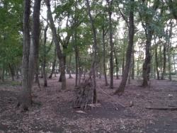【必見キャンプ生活】 キャンプファイヤー(焚き火)で使う枝を拾う♪