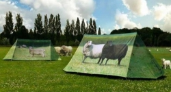 FIELDCANDY/ANIMAL FARM