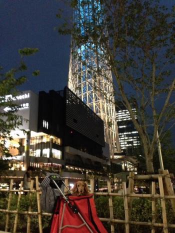 skytree粋②
