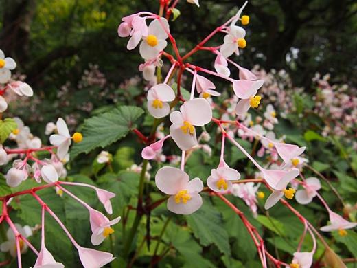 chichibu-20130907-21s.jpg