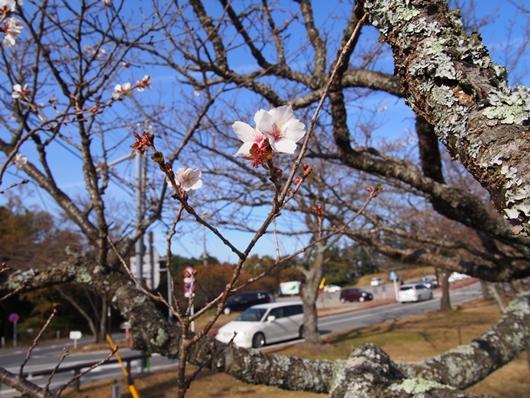 oomuro-20131124-03s.jpg