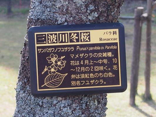oomuro-20131124-09s.jpg