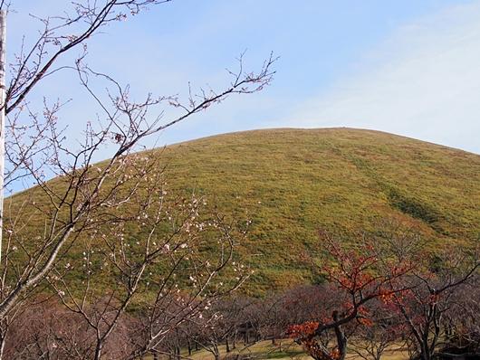 oomuro-20131124-10s.jpg