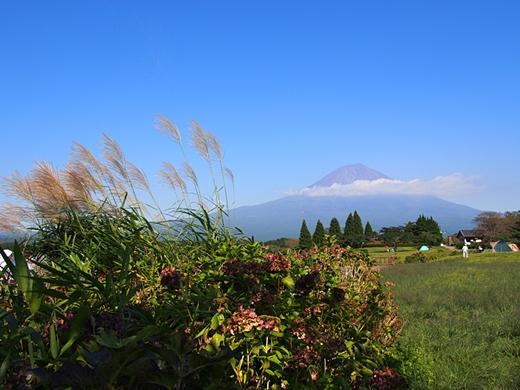 tanuki-20130918-05s.jpg