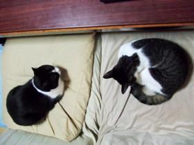 猫それぞれ