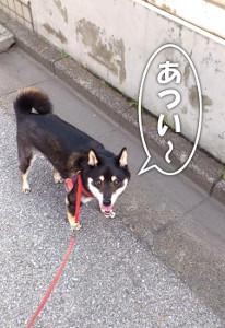 130701_atsui.jpg