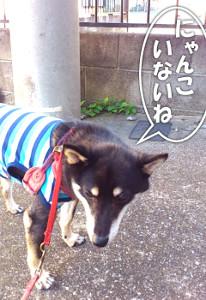 130707_shukai.jpg
