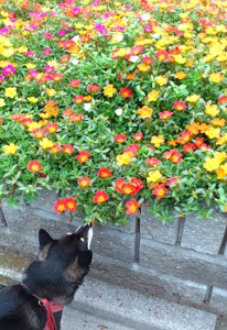 130726_flower.jpg
