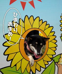 130804_akeno7.jpg