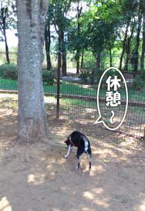 130804_akeno8.jpg