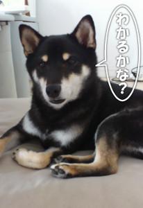 131005_kakure3.jpg