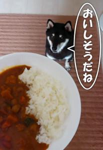 131103_curry2.jpg