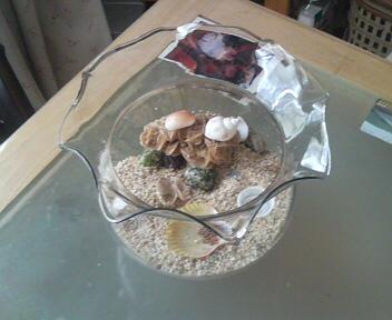 オカヤドカリ鉢