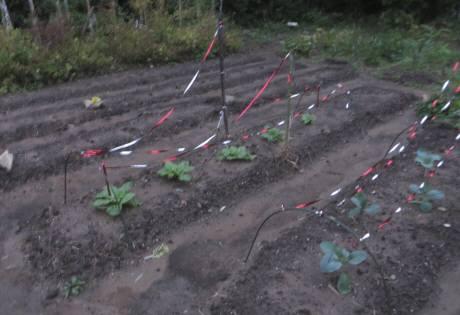 2014_10 10_白菜とブロッコリー