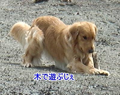 CIMG9017 (400x315)ー1