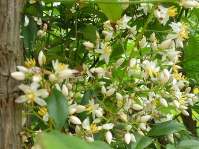 資福寺の花たち