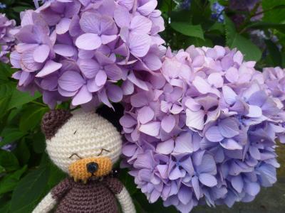 資福寺の紫陽花