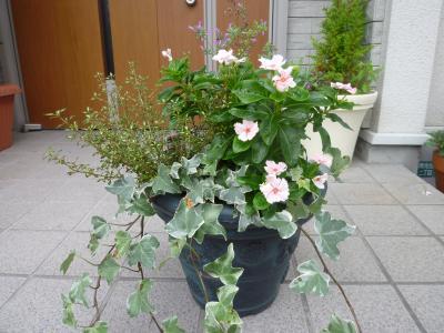 庭の寄せ植え