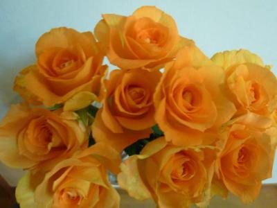 オレンジ・バラ