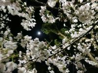BL130325夜景・夜桜1IMG_0508
