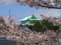 BL130403名古屋城の桜5RIMG0243