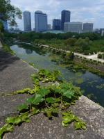BL130629大阪城公園5RIMG0439
