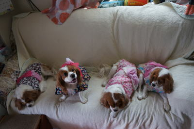 4姉妹 9