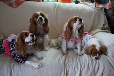 4姉妹 8