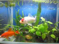 7Goldfish.jpg