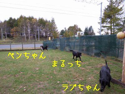 b20131026-DSCN8187.jpg