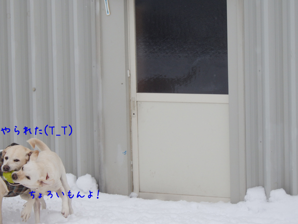 3_20141211014807e77.jpg