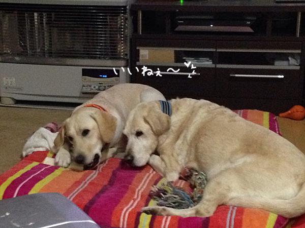 bed1_201412022156594a3.jpg